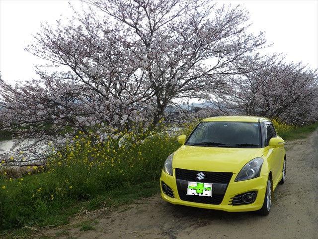 今川の桜-1 スイフト