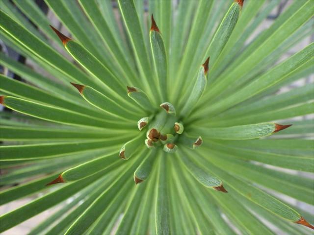 刺々しい植物