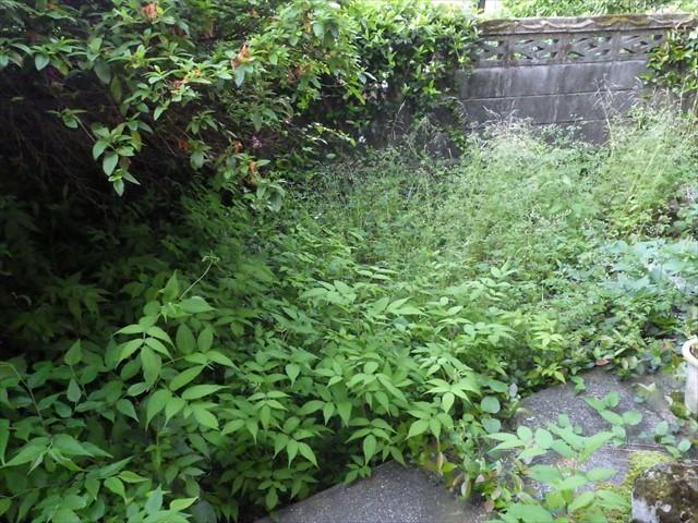 裏庭の雑草