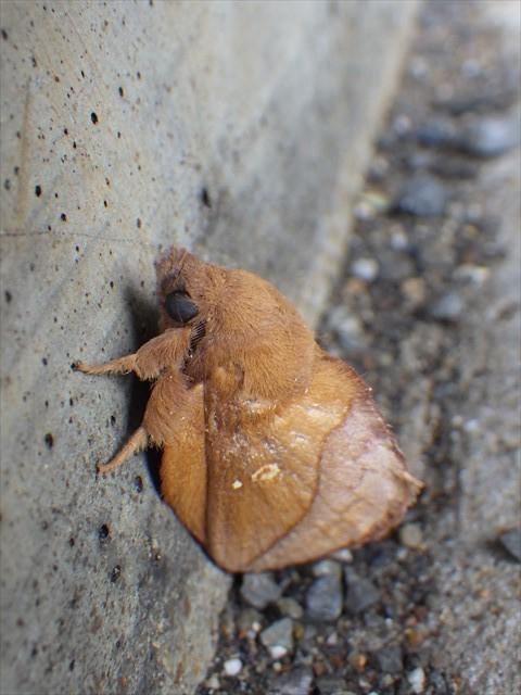 キュートな蛾-1
