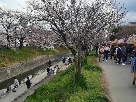9 大中公園・桜の開花状況