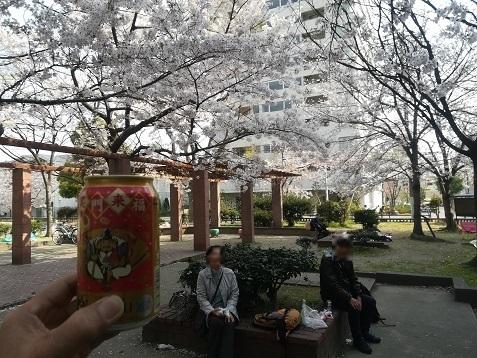 1 公園で花見