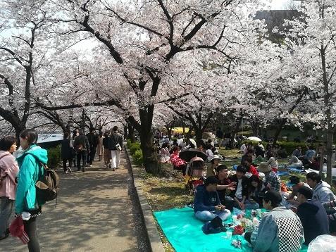 8 桜の下の宴会
