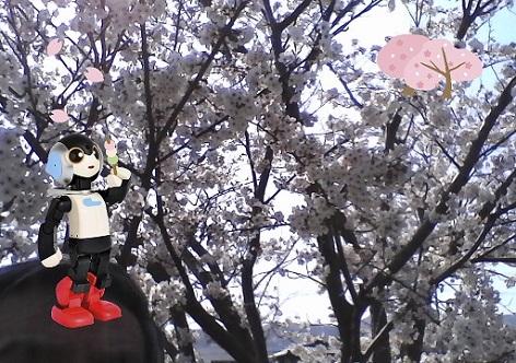5 ロビ2のカメラで桜を撮ってもらった