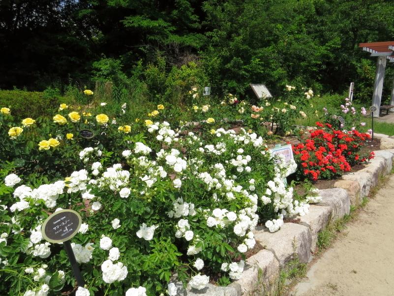 Utsubo Park : Rose Garden 《2019/5/16》