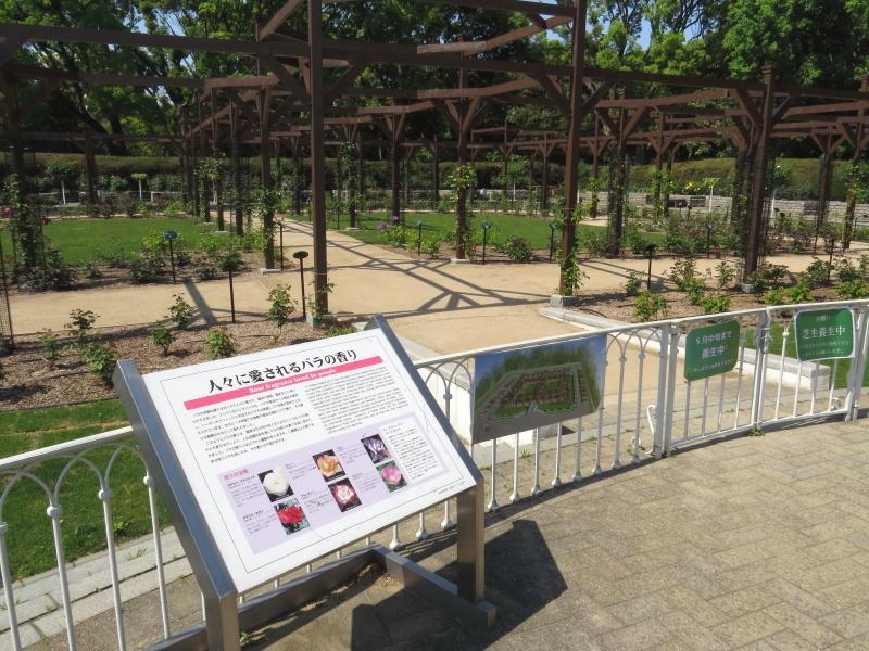 長居植物園バラ園2019