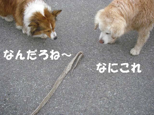 1-f0114893_742881.jpg