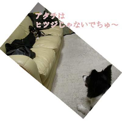 2-f0114893_10483356.jpg