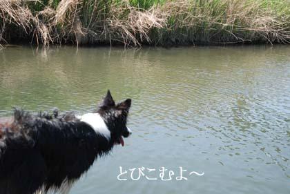 24-f0114893_7532592.jpg