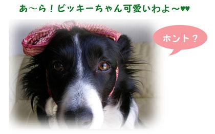 4-f0114893_1585458.jpg