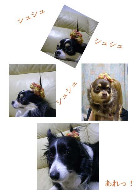 5-2009-2-16.jpg