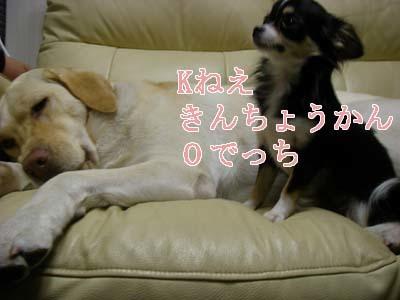 5-f0114893_10492933.jpg