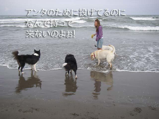 6-f0114893_95632.jpg