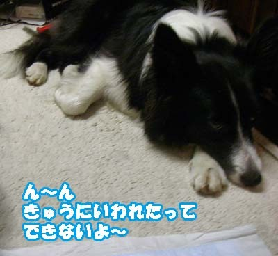 7-f0114893_9241811.jpg