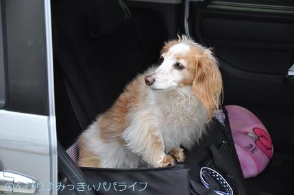 shinzatsuon20190401.jpg