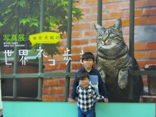 ネコ歩き展2