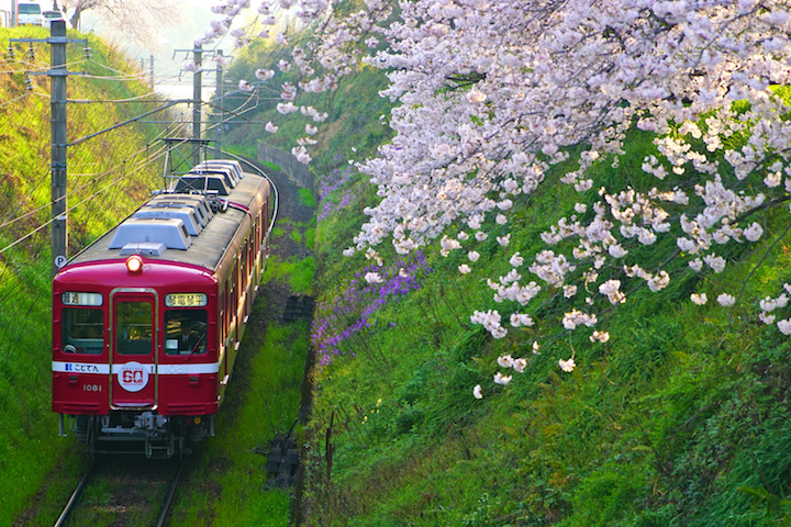 190407 kotoden 1000 revibal1 kazashigaoka sakura