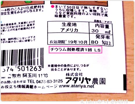 ペトさい(つるなしインゲン・Remake)04