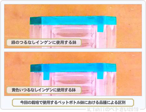 ペトさい(つるなしインゲン・Remake)05