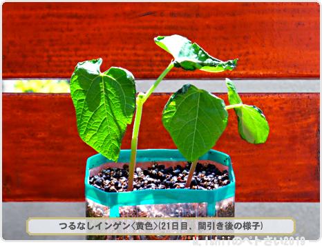 ペトさい(つるなしインゲン・Remake)21