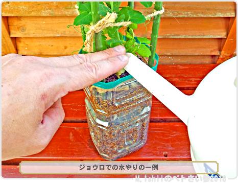 ペトさい(スナップえんどう・改)40