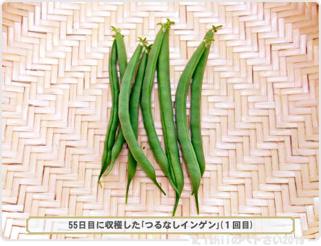 ペトさい(つるなしインゲン・Remake)32