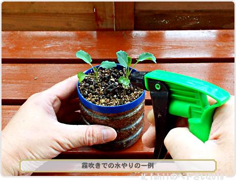 ペトさい(茎ブロッコリー)23