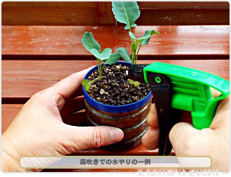 ペトさい(茎ブロッコリー)26