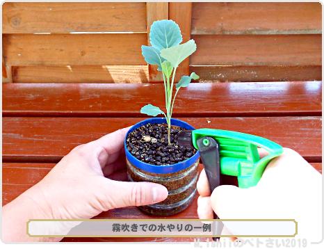 ペトさい(茎ブロッコリー)30