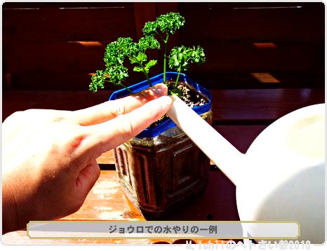 ペトさい(パセリ・改)65