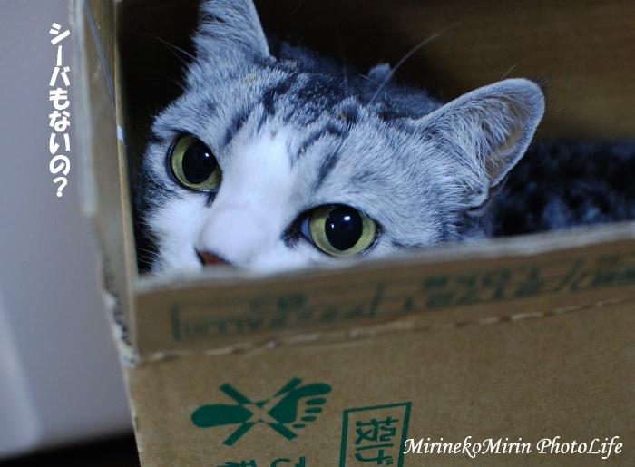 dsc_8447箱猫