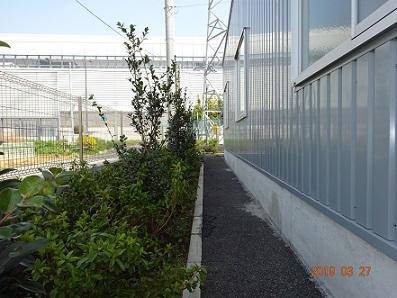 DSC00345第二工場つつじ2
