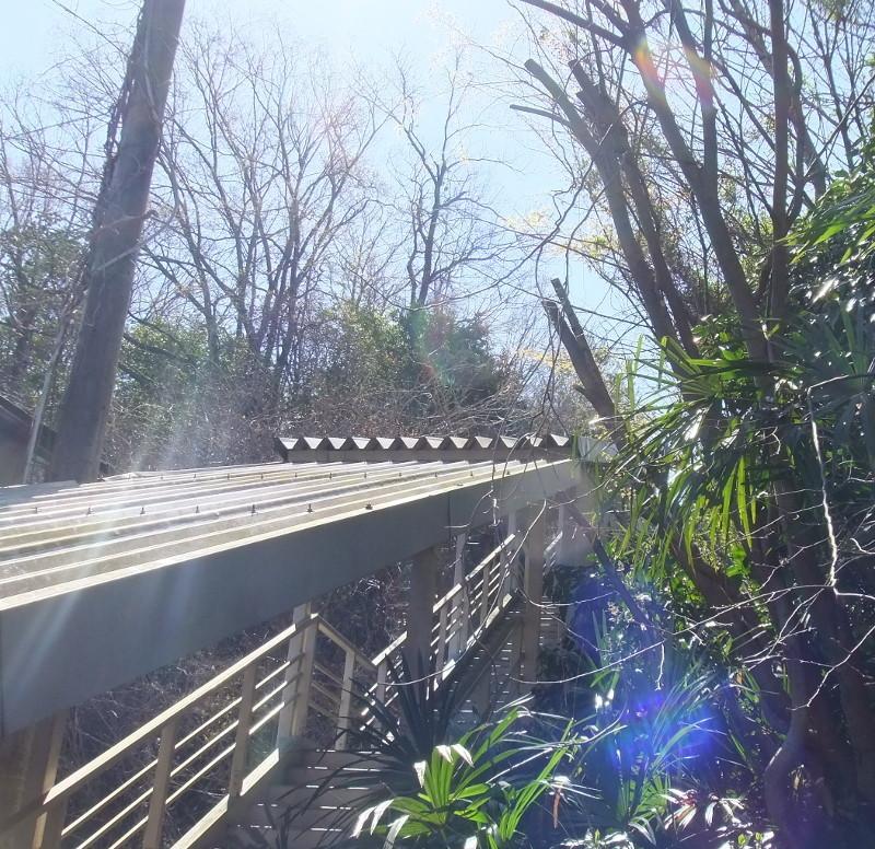 公民館階段屋根雑木伐採5