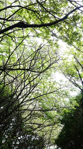 20190420原生の森035