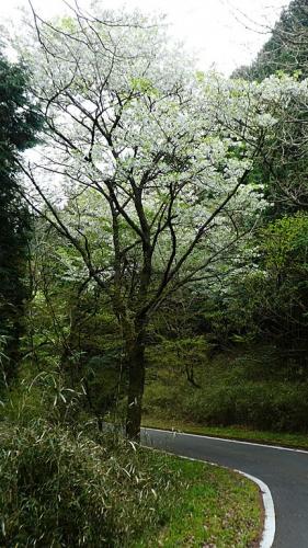 20190420原生の森034