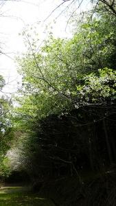 20190420原生の森053
