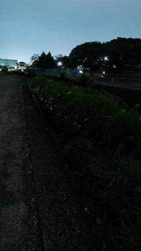 20190531沢地川21GX7mk2