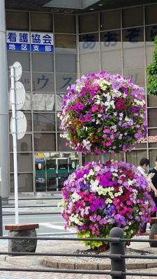 20190606愛鷹広域公園003