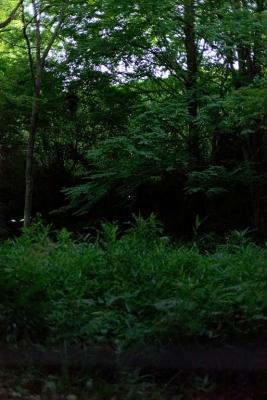 20190606愛鷹広域公園053K1mk2