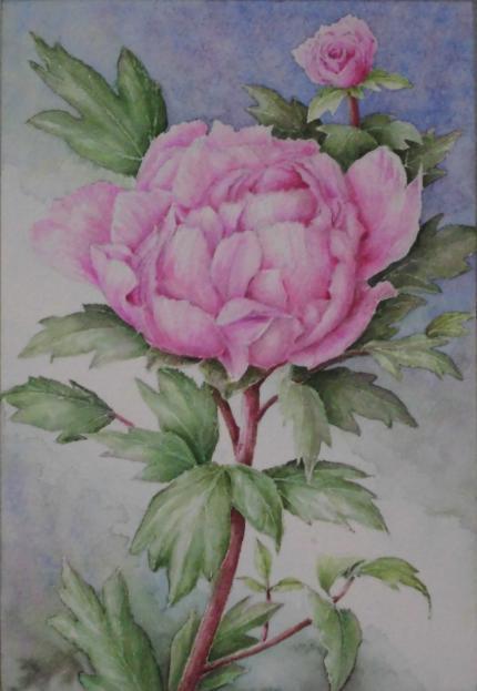 春牡丹 1904