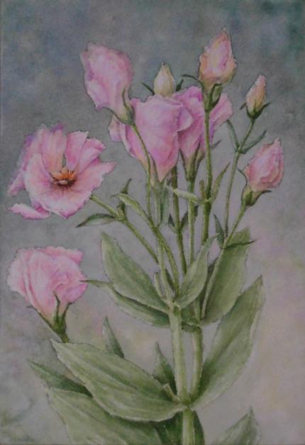トルコキキョウ 1906