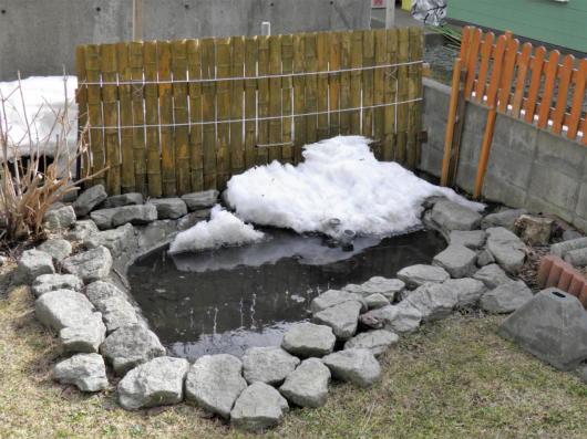 池の周り(1)