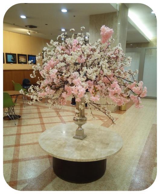 桜が満開1-1