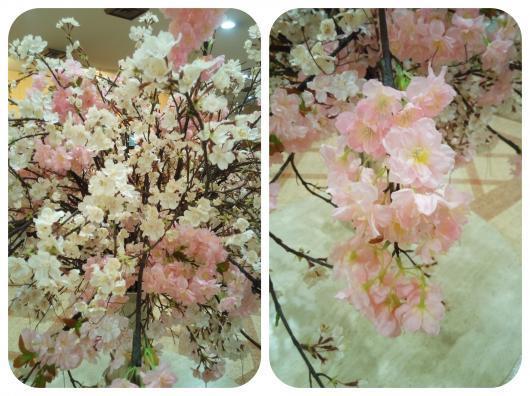 桜が満開2-1