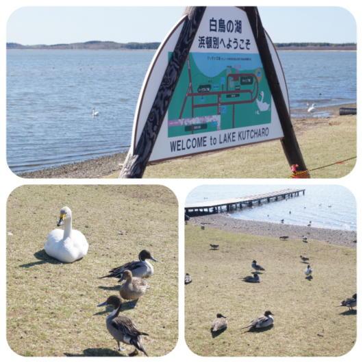 クッチャロ湖2(1)