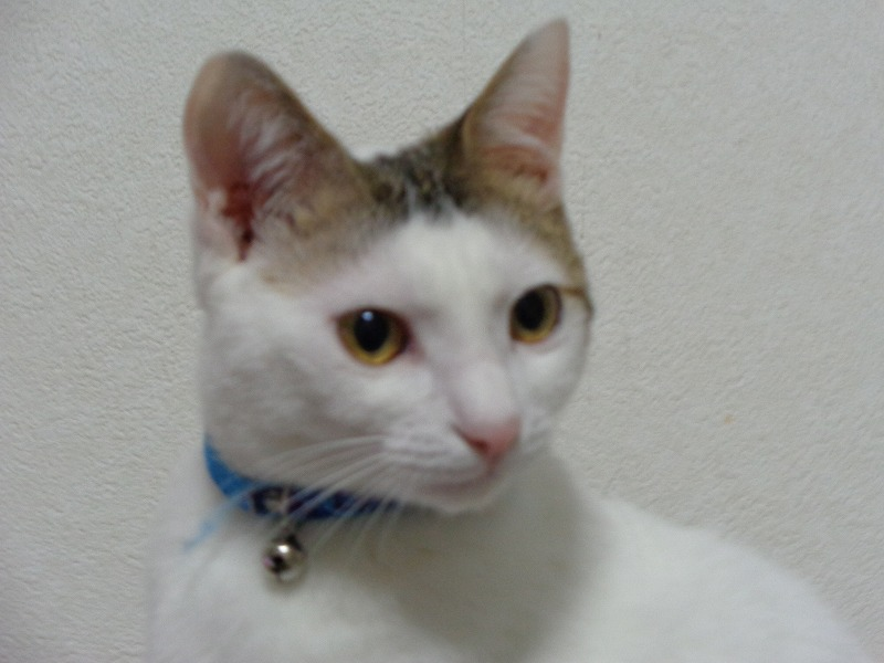 daichi0080-s.jpg