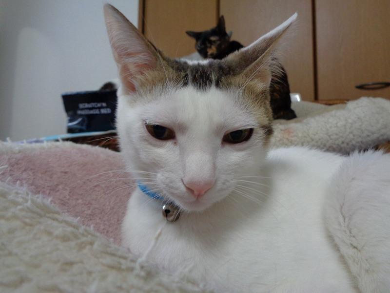 daichi0095-s.jpg