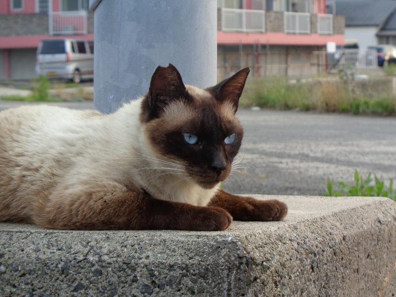 shamuo0140-s.jpg