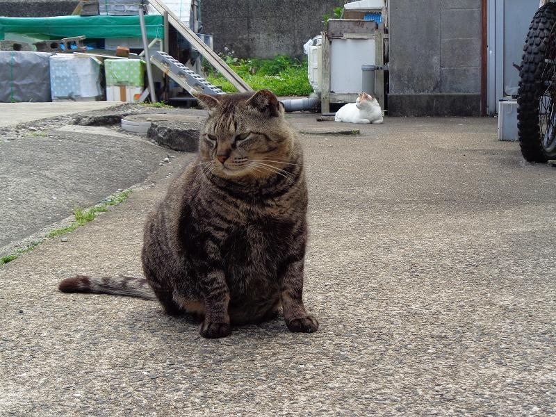 torajirou0104-s.jpg
