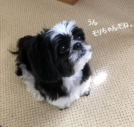 IMG_2200moji.jpg